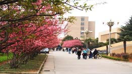 春天的校园