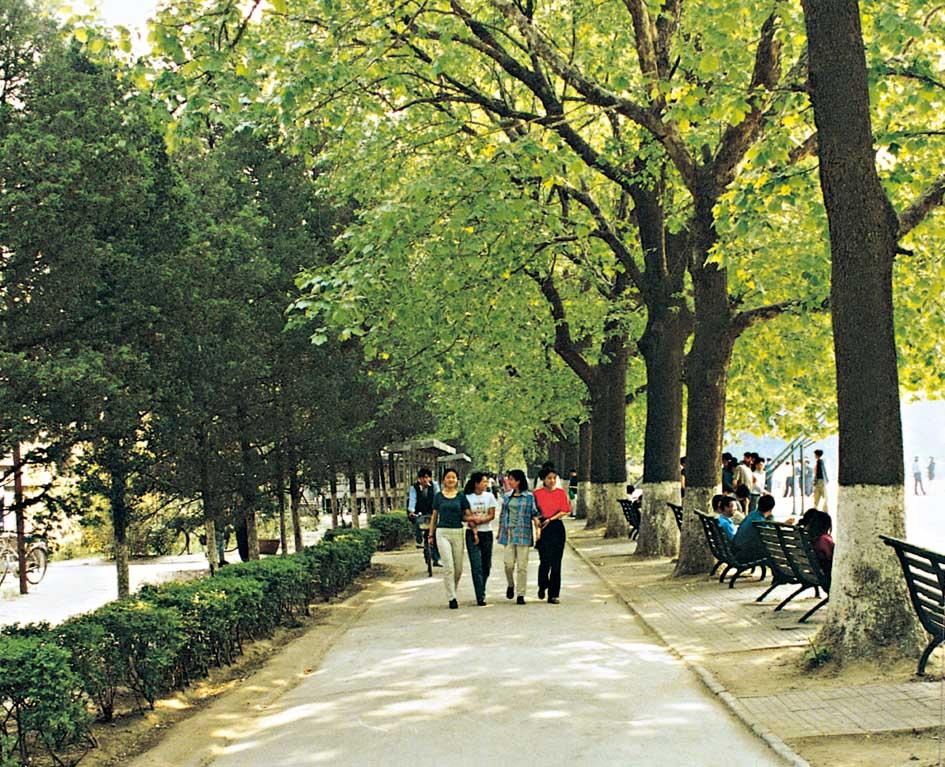 校园风景之宁静小路