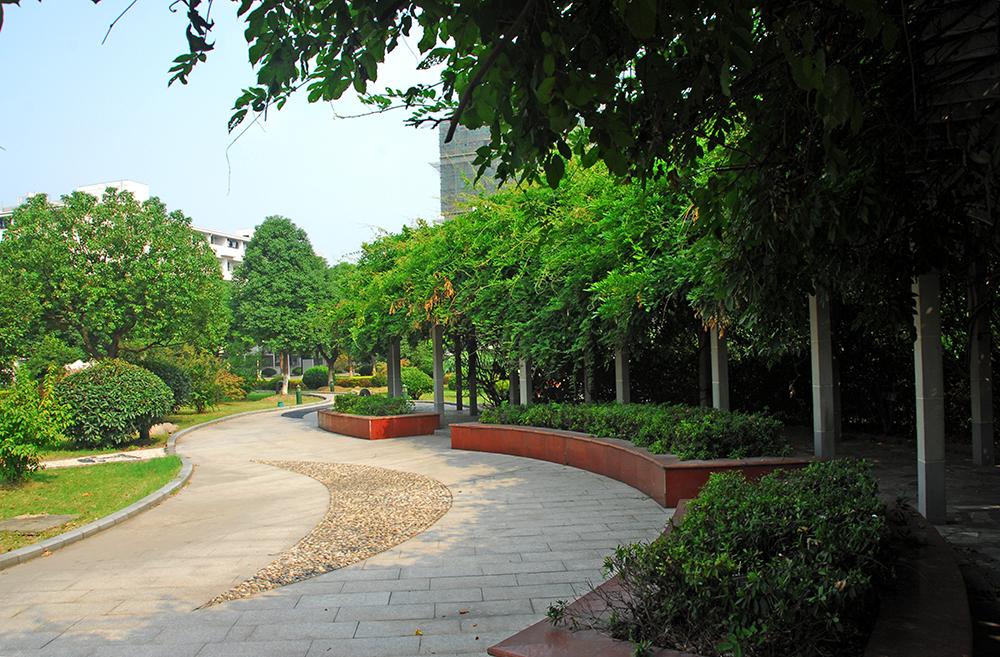 长廊绿藤边的走道