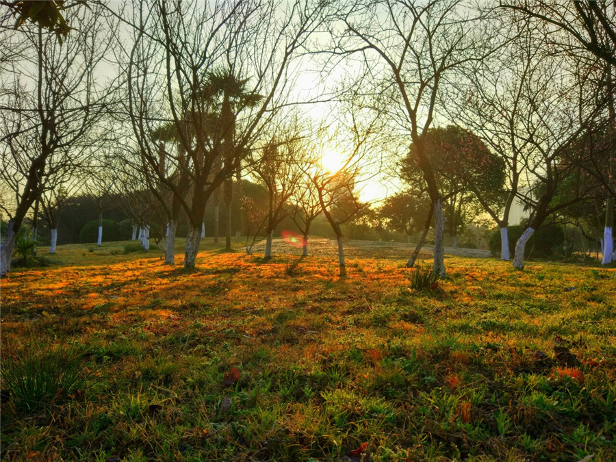 大门花园晨景